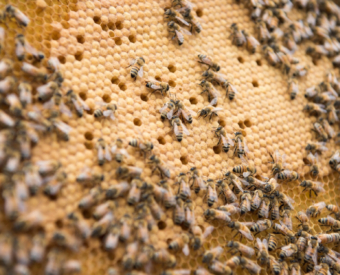 養蜂家としてのスキルと経験を活かし 地域の蜂の駆除も承っています