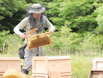 蜂場で貯蔵し熟成させる